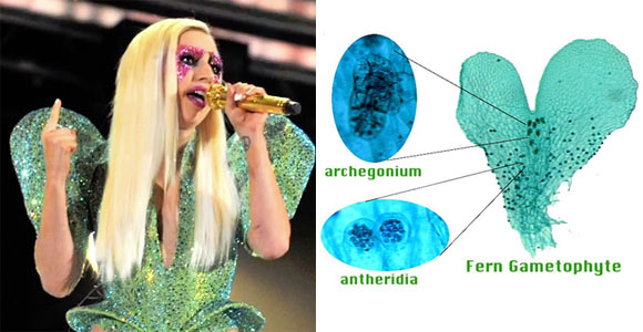Lady Gaga Fern Species Resemble, Singer Wear Costume Like gametophyte